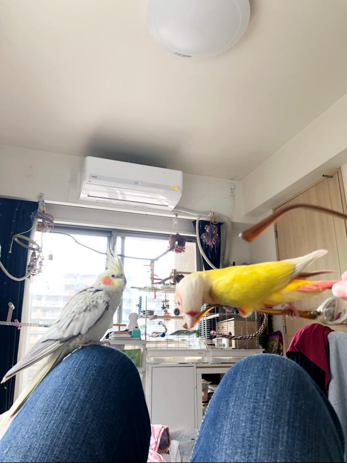 異種のインコ、同時放鳥